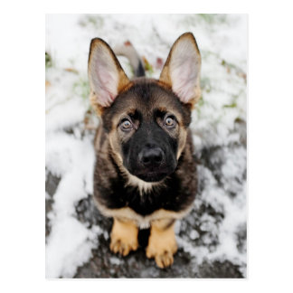 Cute Puppy Looking Up Postcard