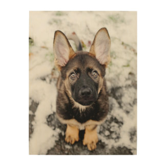 Cute Puppy Looking Up Wood Wall Art