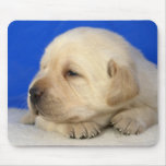 Cute puppy mouse pad