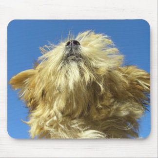 Cute puppy nose in the air face portrait mouse pad