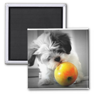 Cute Puppy with Apple Magnet