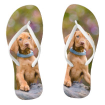 Cute puppyeyed Hungarian Vizsla Dog Puppy Photo _- Flip Flops