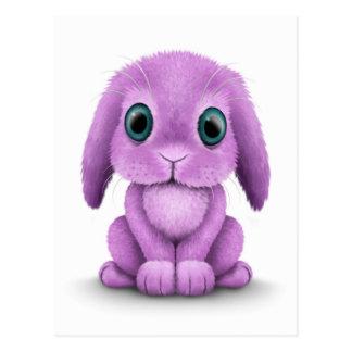 Cute Purple Baby Bunny on White Postcard