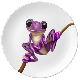 Cute Purple Tree Frog on a Branch on White Plate