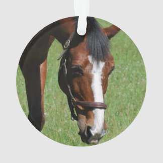 Cute Quarter Horse