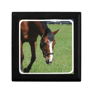 Cute Quarter Horse Keepsake Box