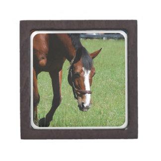 Cute Quarter Horse Premium Jewelry Boxes
