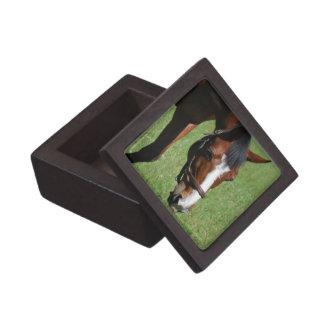 Cute Quarter Horse Premium Keepsake Box