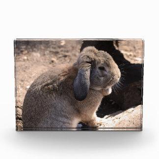Cute Rabbit Acrylic Award