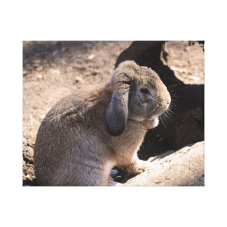 Cute Rabbit Stretched Canvas Prints