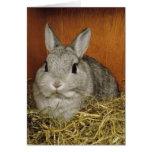 Cute Rabbit Card Greeting Card