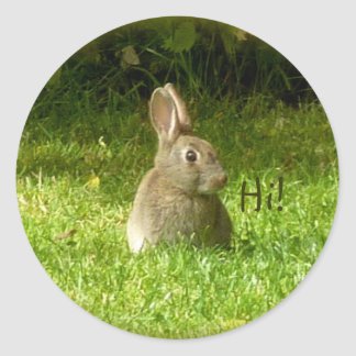 Cute rabbit! classic round sticker