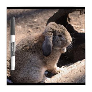 Cute Rabbit Dry-Erase Boards