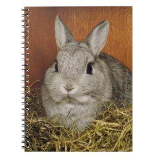 Cute Rabbit Notebook