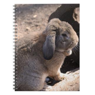 Cute Rabbit Notebooks