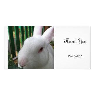 Cute Rabbit Picture Card