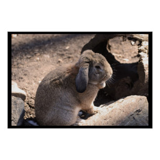 Cute Rabbit Posters