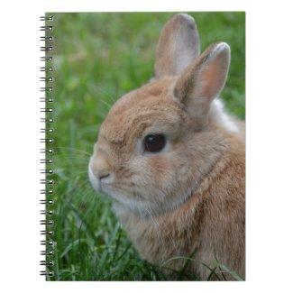 Cute Rabbit Spiral Note Books