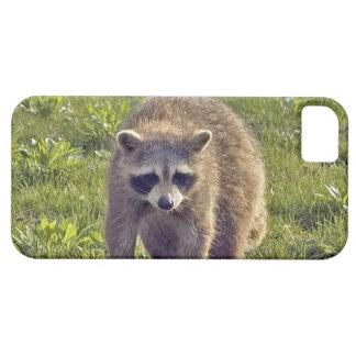 Cute Raccoon iPhone 5 Covers