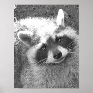 Cute Raccoon Print
