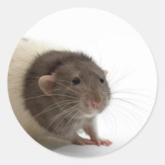 Cute Rat Close-Up Sticker