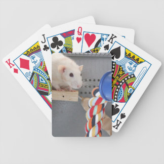 Cute rat in cage bicycle playing cards