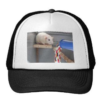 Cute rat in cage cap