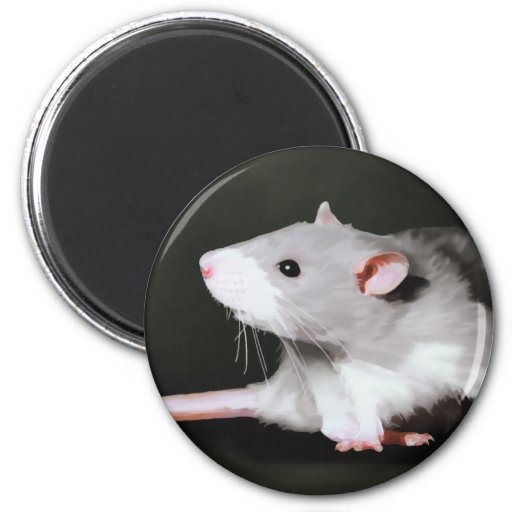 Cute Rat painting 2 Inch Round Magnet
