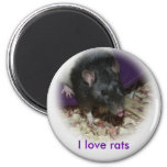 Cute rat sticking out his tongue magnet refrigerator magnet