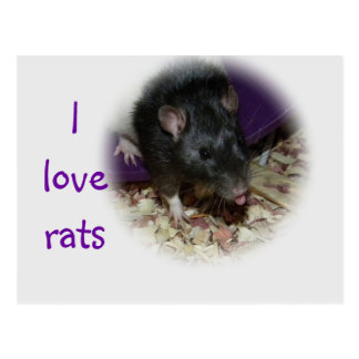 Cute rat sticking out his tongue post card