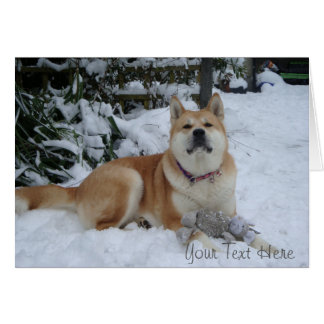 Cute red akita in snow with grey mouse toy cards