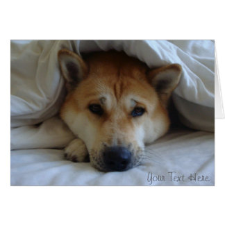 Cute red akita peeping from under bed blankets greeting cards