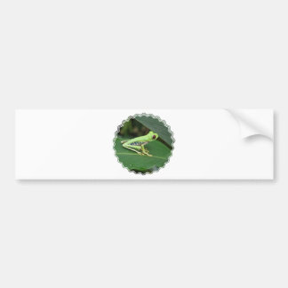 Cute Red Eyed Tree Frog Bumper Stickers