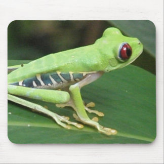 Cute Red Eyed Tree Frog Mouse Pad
