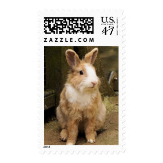 Cute Red Hare Bunny Rabbit Wildlife Stamp
