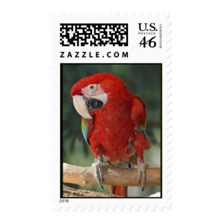 Cute Red Macaw Parrot on US Postage Stamps