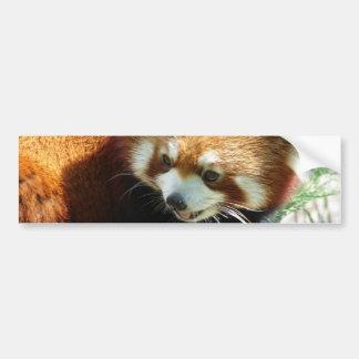 Cute Red Panda Bear Bumper Sticker Car Bumper Sticker
