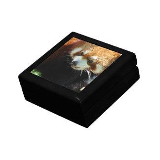 Cute Red Panda Bear Gift Box