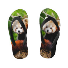Cute Red Panda Bear Kid's Flip Flops at Zazzle