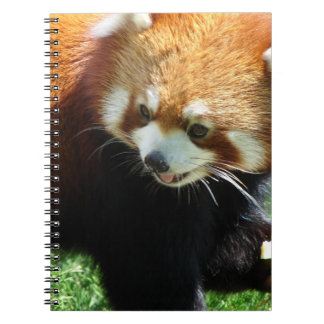 Cute Red Panda Bear Notebook