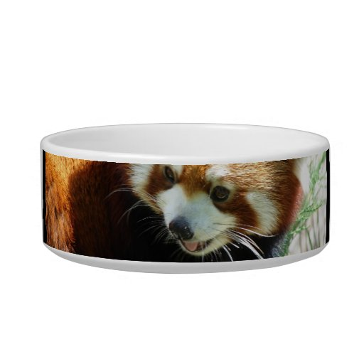Cute Red Panda Bear Pet Bowl