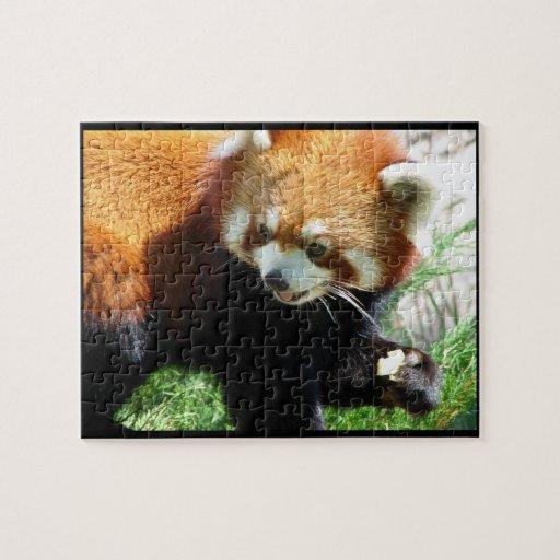Cute Red Panda Bear Puzzle