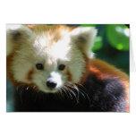 Cute Red Panda Greeting Cards