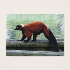 Cute Red-ruffed Lemur Atc Aceo Trading Business Card at Zazzle
