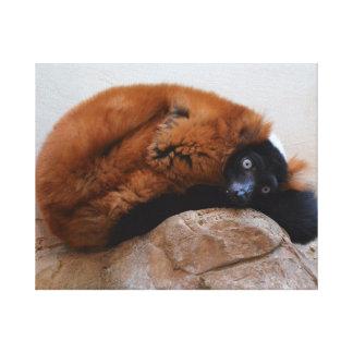 Cute Red Ruffed Lemur Gallery Wrap Canvas