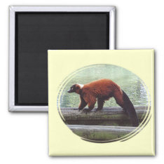 Cute Red-ruffed Lemur Red Fur White Neck Magnet at Zazzle