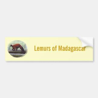 Cute Red-Ruffed Lemur Red Fur White Neck Room Bumper Sticker