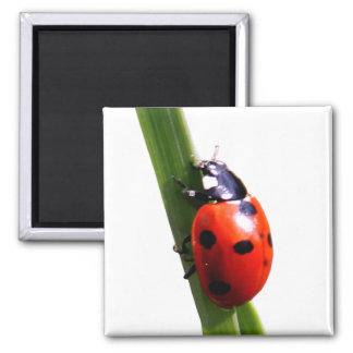 Cute Red Spotted Ladybug 2 Inch Square Magnet