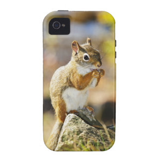 Cute red squirrel eating nut iPhone 4/4S cases