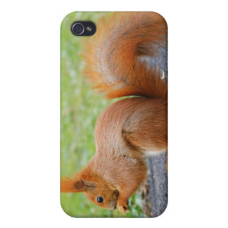 Cute Red Squirrel iPhone 4/4S Cases